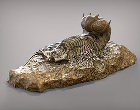 Fossil series - Trilobyte 3D print model