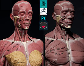 3D model Female Anatomy Kit and Human Anatomy Kit