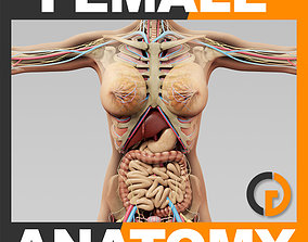 Human Female Anatomy Body Skeleton Internal 3D model