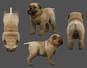 3D model rigged Pug dog