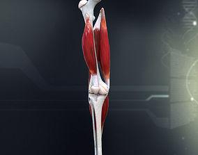 3D Human Knee Joint Anatomy