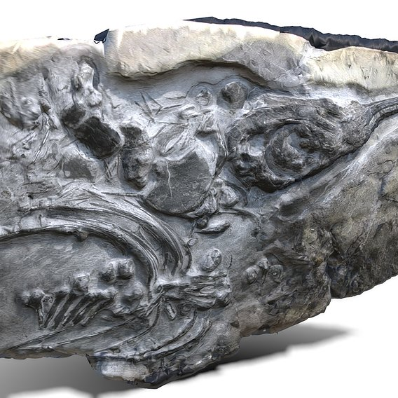 Fossil Ichthyosaur