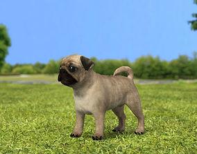 3D Pug Puppy