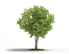 Mature Naval Orange Tree 3D