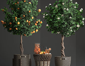 3D model Mandarin Tree with Fruit