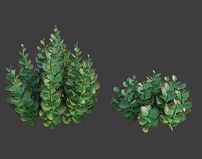 3D XfrogPlants Paddle Plant - Kalanchoe Thyrisiflora