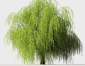 3D Tree Willow