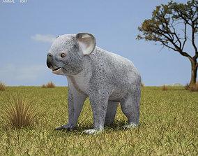 3D asset Koala Phascolarctos Cinereus