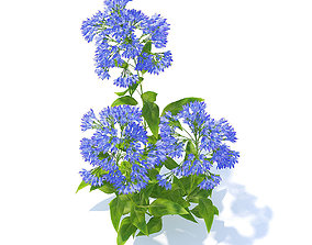 plant Bellflower 3D Model