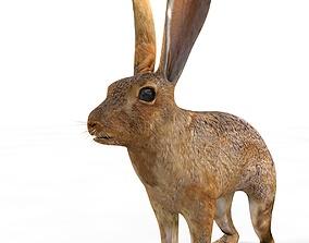 3D model Hare Rabbit Rigged
