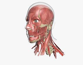 Human Face Muscle Anatomy 3DSmax