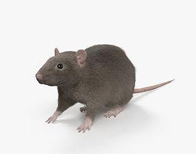3D model Common Rat HD