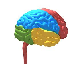 Human Brain cerebrum 3D model