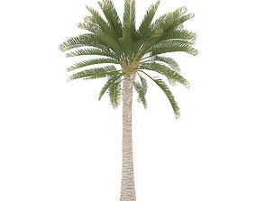 3D animated Palm Tree