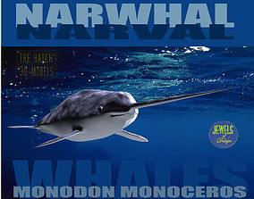 3D model animals Narwhal