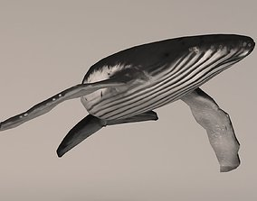 3D asset Humpback Whale
