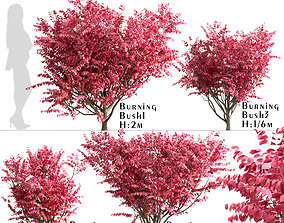 Set of Burning Bush or Euonymus Alatus Bushes 3D