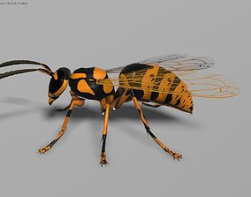 3D model Wasp orange