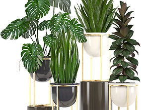 ficus Collection of plants in pots 3D