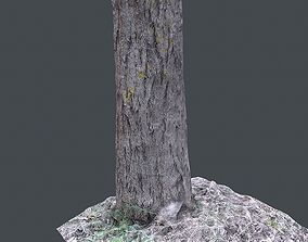 small tree 3D asset