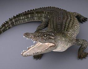 Nile Crocodile 3D