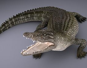 Crocodile 3D Models | CGTrader