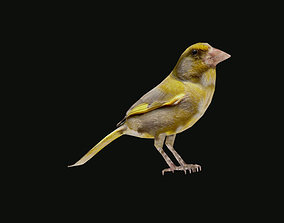 VR / AR ready greenfinch 3d models