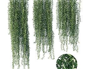 3D Vernonia elliptica 03