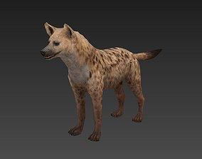 3D asset Hyaenidae