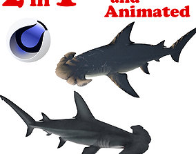 3D asset Hammerhead Shark 2 in 1 Rigged and Animated