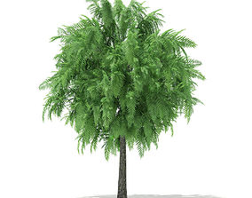 3D White Willow Salix alba 4m