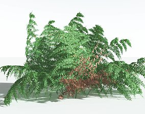 EVERYPlant Common Bracken SINGLE --1 Model--
