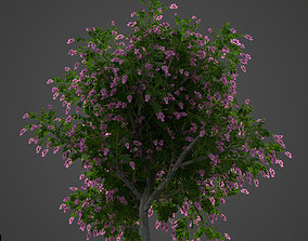 2021 PBR Giant Crape Myrtle Collection 3D