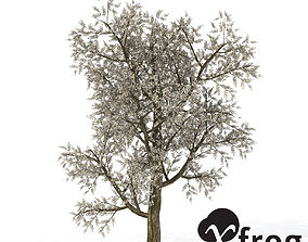 3D model XfrogPlants Plum Tree
