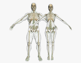 Lymphatic System with Skeleton Anatomy Collection 3DSmax