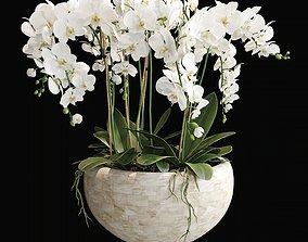 Orchid 4 3D