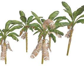 Banana Trees 02 3D model