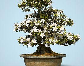 Satsuki Bonsai Tree Blossom 4 3D asset