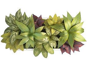 Plant Frame 60 X 30 Cms 3D model