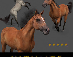 animated Ultimate Horse Collection - 3d model