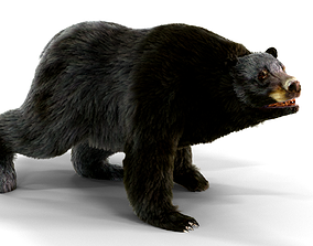Fur Black Bear animated 3D