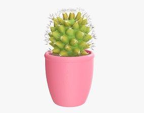 3D Cactus plant with pot