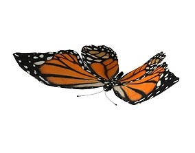 3D asset animated Rig Butterfly