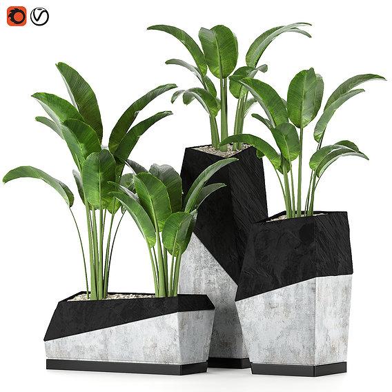 Plant Collection Set 01