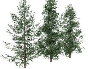 Forest Conifer Spruce Tree 3D asset game-ready
