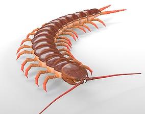 Centipede 3D Models | CGTrader