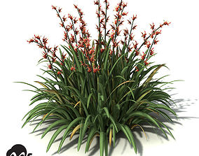 3D model XfrogPlants New Zealand Flax