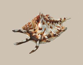 Big Seashell 3D asset