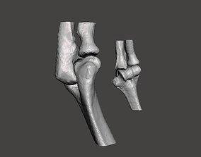 Elbows - female- age 37 3D model