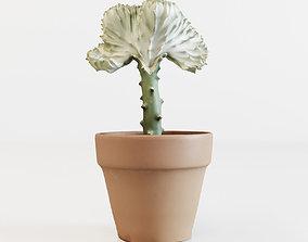 3D Coral Cactus